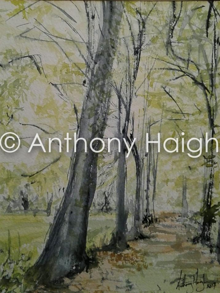 Tony Haigh2